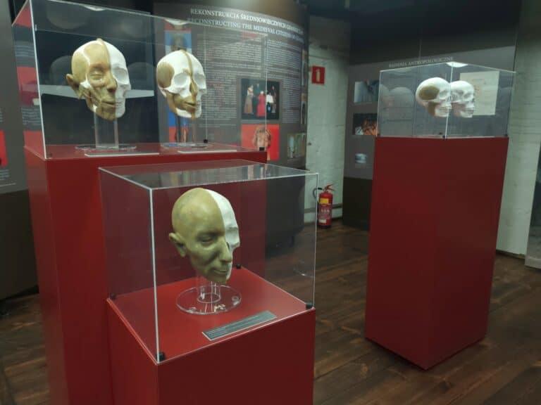 Gabloty muzealne ze zrekonstruowanymi czaszkami