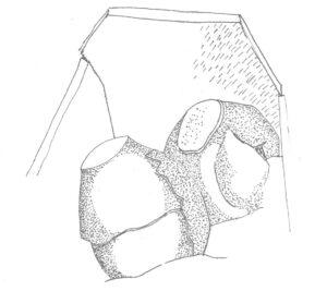 Dokumentacja rysunkowa tzw. grobu kloszowego ze Starej Jani (arch. MAG)